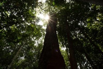 Vídeo: Interpretação ambiental ajuda a entender a importância das Unidades de Conservação
