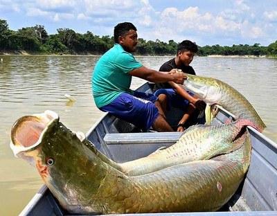 Da floresta ao Rio, Festival Gosto da Amazônia une sustentabilidade e gastronomia