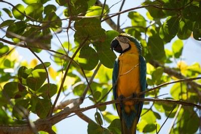 Dia da Amazônia - 5 de setembro