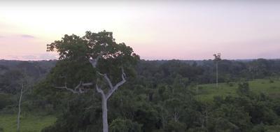 Vídeo: Monitoramento Participativo na Resex Cazumbá-Iracema